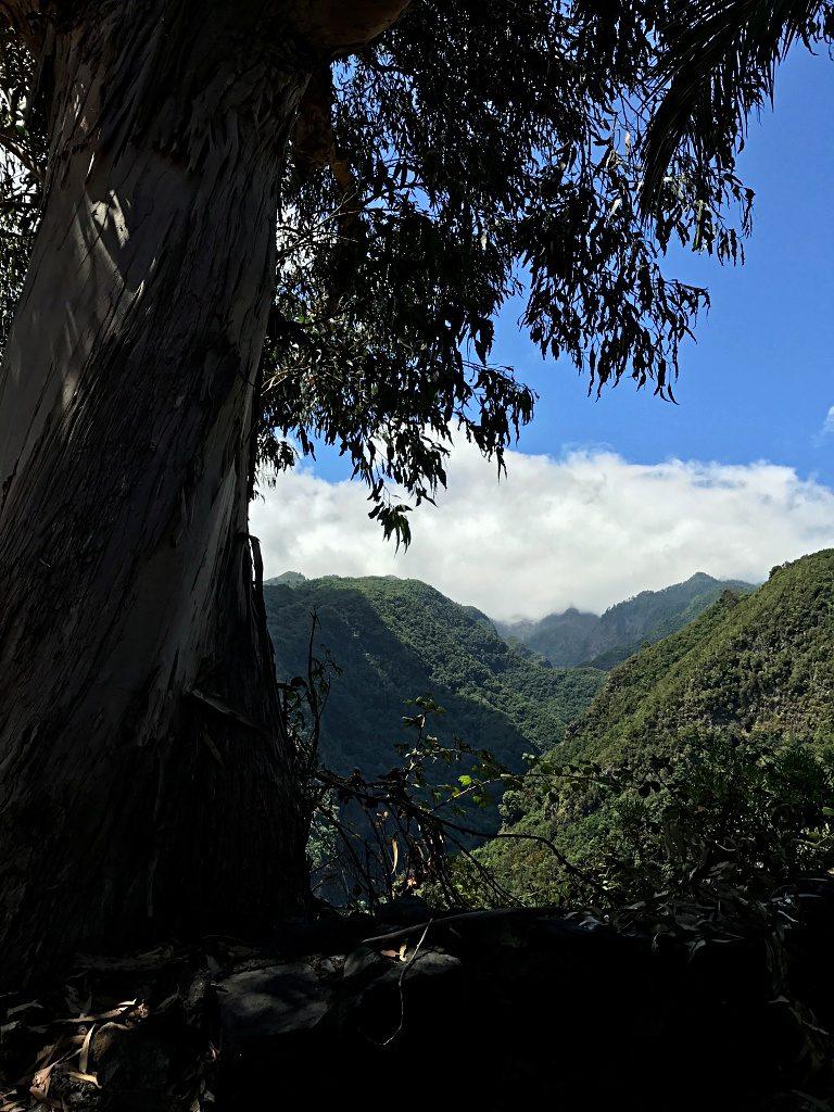 Wandern auf La Palma – Von Los Tilos nach Los Sauces und zurück