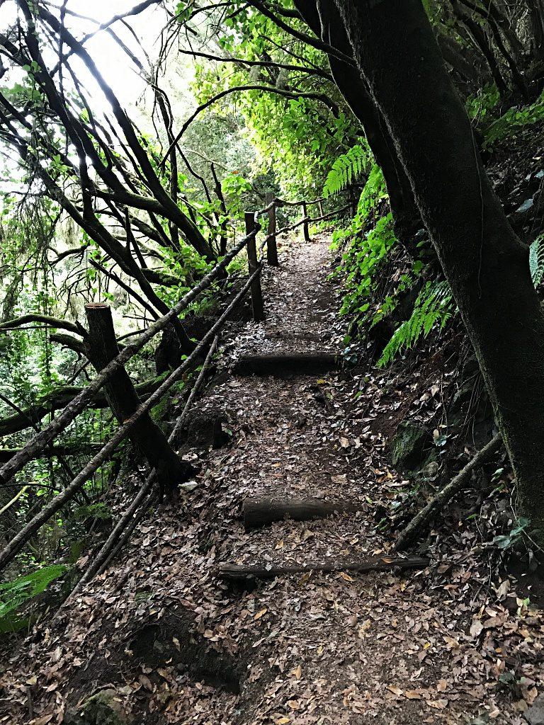 Wandern auf La Palma – Von La Zarza nach Don Pedro und zurück