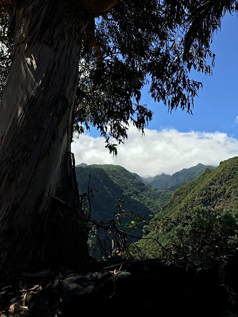 Hiking on La Palma – From Los Tilos to Los Sauces and back